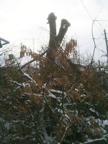Планова чистка дерев... позапланова захопленість