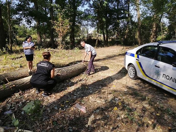 Радомишльська поліція проводить перевірку по факту законності спилювання дерев в урочищі біля річки Тетерів